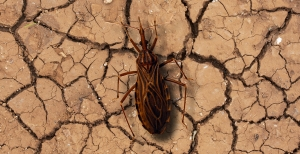 27 de agosto: Día Nacional por una Argentina sin Chagas